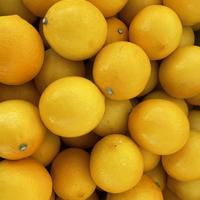 マイヤーレモン3キロ