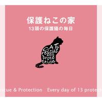 保護ねこの家サポート