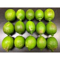 皮まで安心減農薬レモン (B級品) 5kg