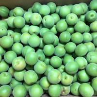 農薬・肥料不使用の青梅 2kg