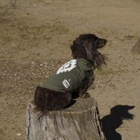ORTEGA(オルテガ)DOG WEAR Tシャツ ORTG-006