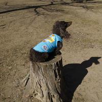 ORTEGA(オルテガ)DOG WEAR Tシャツ ORTG-005