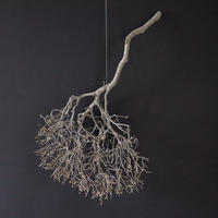 Branch Doudan C