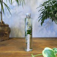 Herbarium<忘れな草>