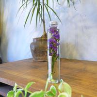 Herbarium<スターチス(紫)>