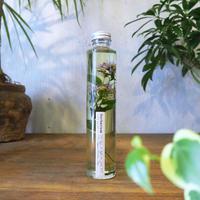 Herbarium <野紺菊>