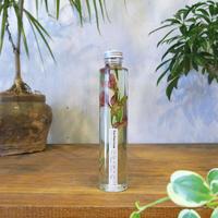 Herbarium<グラジオラス>