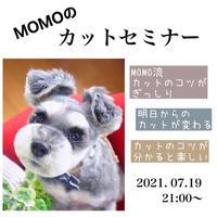 7月19日 新 MOMOのズームセミナー