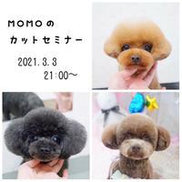 3月3日 Momoのカットセミナー