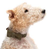 犬用ツイード蝶ネクタイ - Mutts & Hounds(UK)
