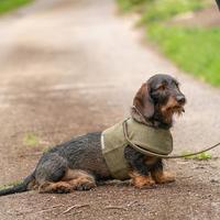 犬用ツイードハーネス - Mutts & Hounds(UK)