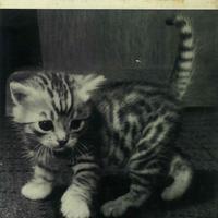 Unsere Katze Bilu / Rainer R. Vetter