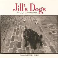Jill's Dog / JILL FREEDMAN