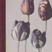 Silent Beauties : Color Photographs from the 1920s / Leendert Blok