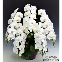 ★ハイグレード★大輪胡蝶蘭 5本立て=ホワイト=
