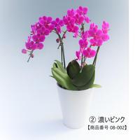 小輪 ミディ胡蝶蘭3本立て=濃いピンク系=