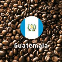 ガテマラコーヒー 500g