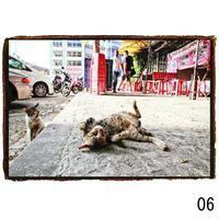 菊池茂夫 写真展「そとねこ 2021」A4プリント【06】