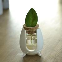 ARO -Pot For Aromaticus-