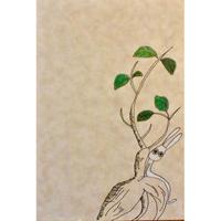 ポストカード 根と葉