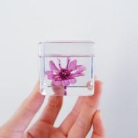 スマートフォンスタンド 「touch flowers」  ジニア