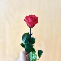 誕生日 クリスマスギフト プリザーブドフラワー 赤バラ