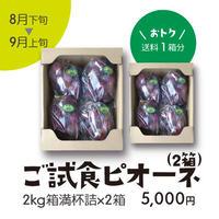 [104B]ご試食ニューピオーネ2kg箱満杯詰×2箱【送料1箱分】