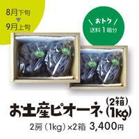 [103B]お土産ピオーネ1kg×2箱【送料1箱分】
