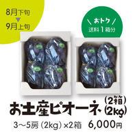 [102B]お土産ピオーネ2kg×2箱 【送料1箱分】