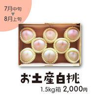 [301]お土産白桃1.5㎏箱