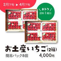 お土産いちご さちのか簡易パック8個[送料1箱分]