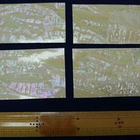 日本アワビ白螺鈿箔 シール加工で便利。はさみで切れます。