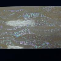 日本アワビ白螺鈿箔Lサイズ シール加工で便利。はさみで切れます。