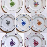 簡易カラーコピー アポニーの花