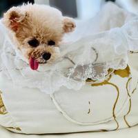 【Lace Bag】インナーバッグ