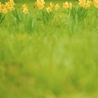 PHOTO TILE STICKER  yellow