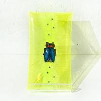 【A】巷で噂の昆虫サーカス