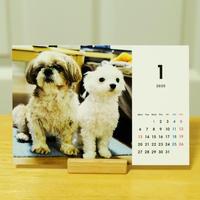 Maroharu Desk Calendar 2020 with Stand