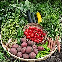 蓼科マリーローズ野菜ファームの高原野菜(送料・税込)