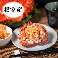 サイズ1kg前後【数々の蟹の味を凌駕する蟹】根室特産の花咲がに(ボイル冷凍)