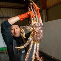 ≪残り1尾≫ 活ボイルたらば蟹 7.5キロ(生きた状態の重さです)【チルドお届け】【送料込み】