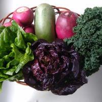 産直野菜詰め合わせセット