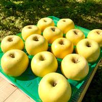 シナノゴールドりんご5キロ16玉から12玉入り送料無料(一部地域を除く)