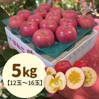 【送料込】贈答用特選!蜜入りサンふじ5kg(12玉〜16玉)