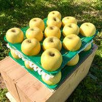 シナノゴールドりんご10キロ 32玉から24玉入り 送料無料(一部地域を除く)