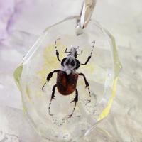 ゴライアスオオツノハナムグリ(beetle007)