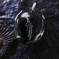 ハンドウイルカ(dolphin432)