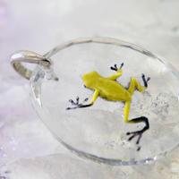 モウドクフキヤガエル(frog032)