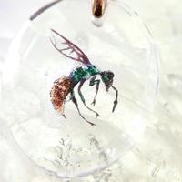 リンネセイボウ(bee012)