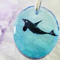 シャチ(orca072)